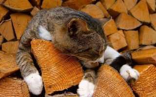 Можно ли осиной топить печь